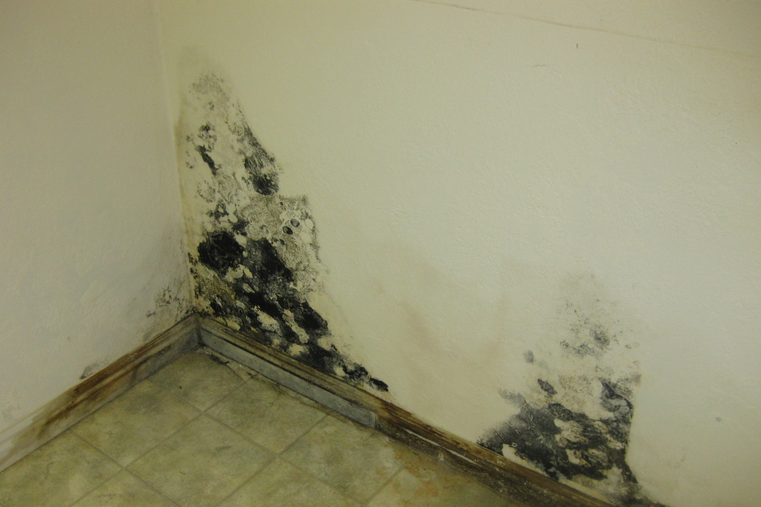 how to get rid of mold on walls in bedroom 28 images how to get rid of mold on the bathroom. Black Bedroom Furniture Sets. Home Design Ideas