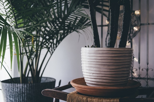 plant-indoor-decor